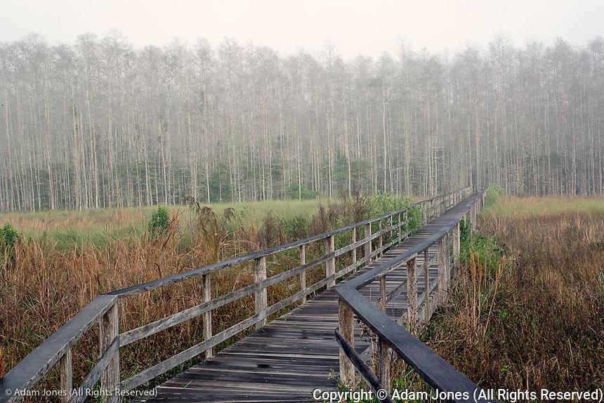 Foggy morning, Corkscrew Swamp Sanctuary, Florida