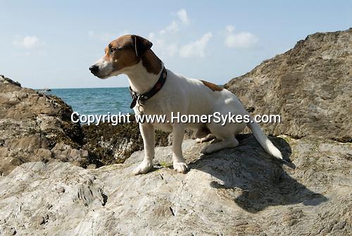 Brendan 2011. Combe Martin Somerset England. The dog beach.