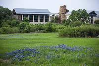Lady Bird Johnson Wildflower Center in Austin Texas with spring bluebonnet meadow (Lupinus texensis)