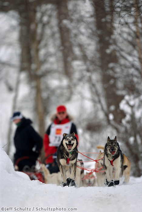 Jim Warren on Back Woods Trail in Anchorage Iditarod 2004