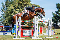 NZL-Glen Beal rides All Expenses Of Renton. Class 23: POLi Paments Premier League Horse Grand Prix. 2020 NZL-Collinson Forex Premier Show Jumping At Woodhill Sands. Helensville. Sunday 12 January. Copyright Photo: Libby Law Photography