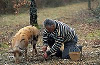 """Europe/France/Midi-Pyrénées/46/Lot/Causse de Limogne/Lalbenque: Mr Raymond Boisset et son cochon """"Kiki"""" lors d'un cavage (recherche des ruffes) - AUTORISATION N°255"""