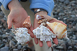 Seashells in Gulf of California