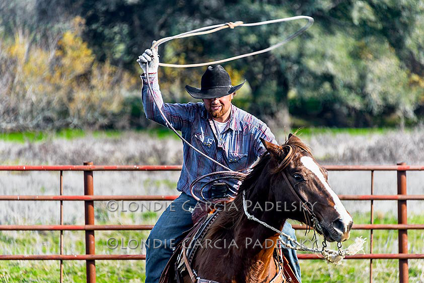 Cowboy roping in corrals at a cattle branding on the Central Coast of California