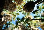 Oasis in Anza-Borrego Desert State Park, California