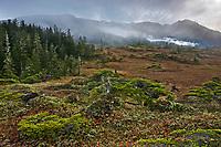 Chugach National Forest, western Prince William Sound, southcentral, Alaska.