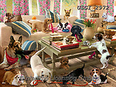 GIORDANO, REALISTIC ANIMALS, REALISTISCHE TIERE, ANIMALES REALISTICOS,pups,puppies, paintings+++++,USGI2972,#a#, EVERYDAY,puuzle,puzzles