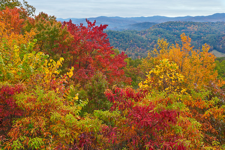 Fall scene as viewed from Foothills Parkway; Great Smoky Mountains National Park, TN