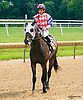 Coop Tries Harder winning at Delaware Park on 7/5/17