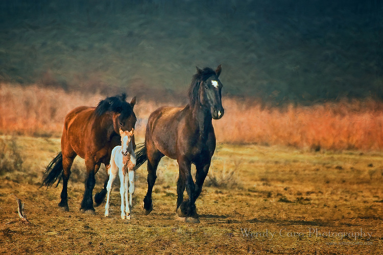 Two adult horses nudging a foal back to the herd, and towards his mother
