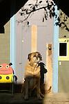 Dog sitting in front of children's playhouse door.