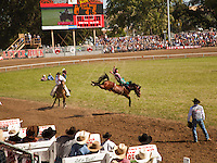 Bronco riding, The Pendleton RoundUp is the largest outdoor rodeo in the world,