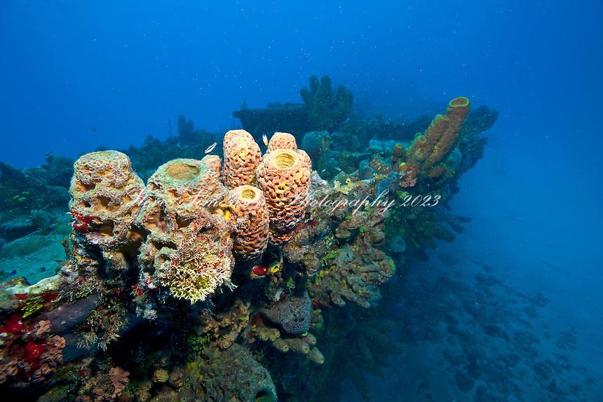 Reef growing on<br /> The Suffolk Maid tug boat, Butler Bay, St. Croix<br /> U.S. Virgin Islands