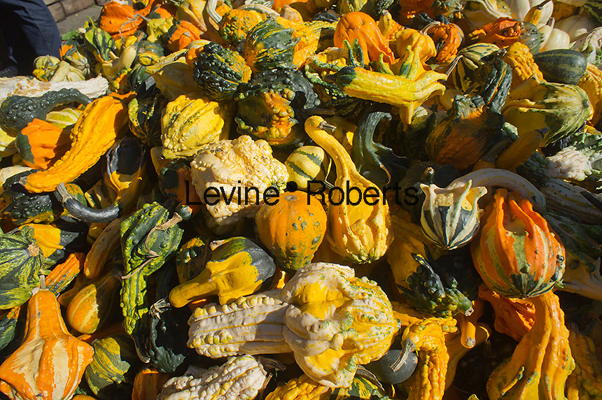 Ornamental gourds at the Union Square Greenmarket in New York on Saturday, October 13, 2012.   (© Richard B. Levine)