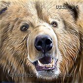 Sandi, REALISTIC ANIMALS, REALISTISCHE TIERE, ANIMALES REALISTICOS, paintings+++++,USSN06,#a#, EVERYDAY,grizzly ,puzzles