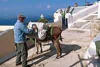 Esel in Imerovigli, Insel Santorin (Santorini), Griechenland, Europa
