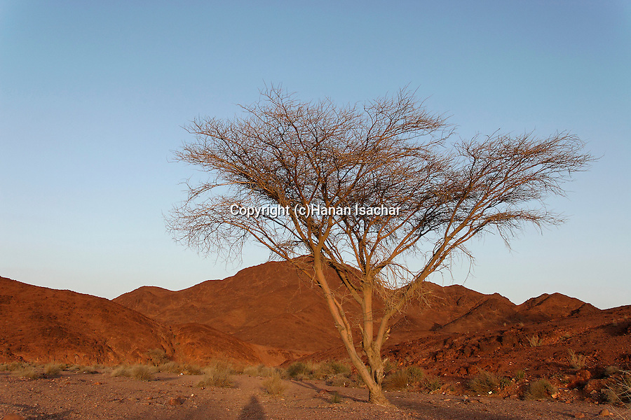Israel, The Negev. Wadi Shani in Eilat Mountains