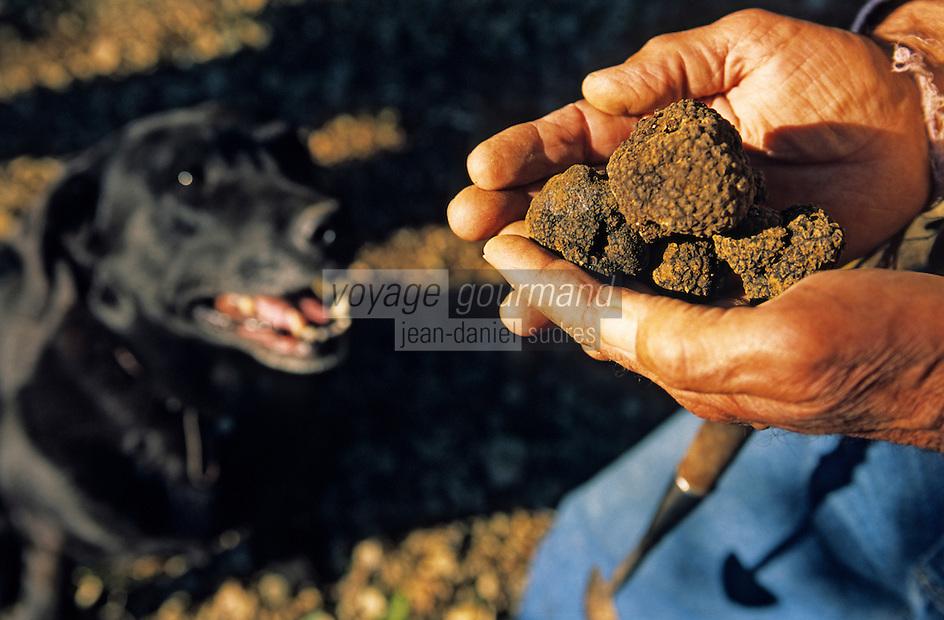 Europe/France/89/Yonne/ Env d'Auxerre /Nangis Quenne: Recherche des truffes de Bourgogne par Francois Beaucamp trufficulteur avec son chien