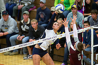MSU Ladybobcats vs UofM LadyGrizzlies (volleyball)