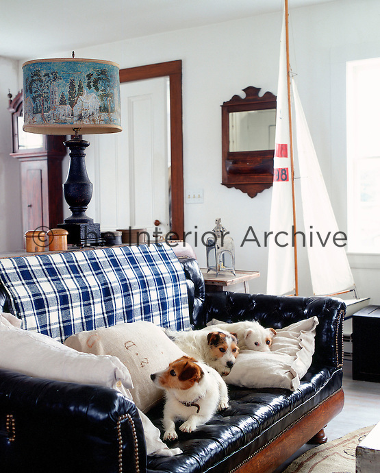 A trio of terriers make themselves at home amongst the soft linen cushions on the leather sofa