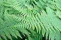 Green fern leaves detail
