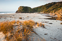 Native sand grass Pingao on beach at Ship Creek near Haast, West Coast, South Westland, UNESCO World Heritage Area, New Zealand, NZ