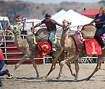 From left, Michael Tragash and Teri Vancecompete in a media exhibition race at the 56th annual International Camel &amp; Ostrich Races in Virginia City, Nev. on Friday, Sept. 11, 2015. <br /> Photo by Cathleen Allison