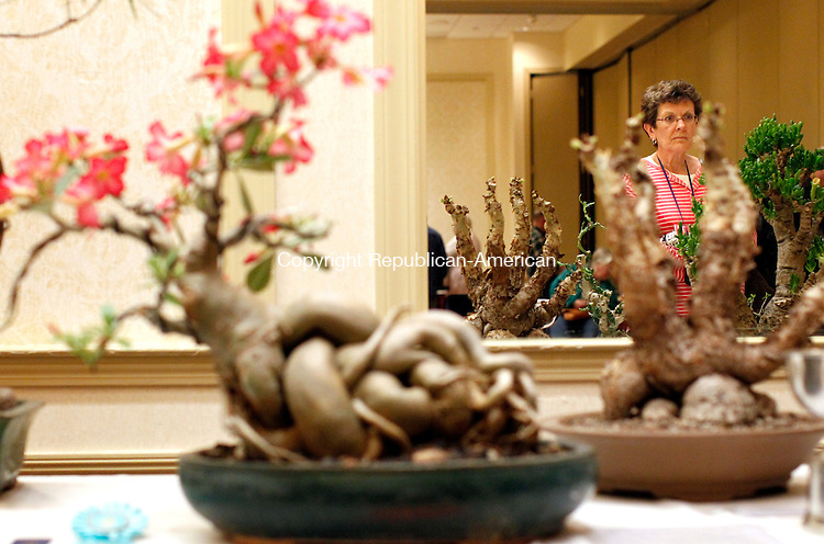 New Haven, CT-14 April 2012-041412CM10-  Marge Calltharp of East Haddam looks at succulents, which were shown during the 29th annual Cactus and Succulent Show and Sale Saturday afternoon at the CoCo Key Water Resort Hotel and Conffrerence Center in Waterbury.  Christopher Massa Republican-American