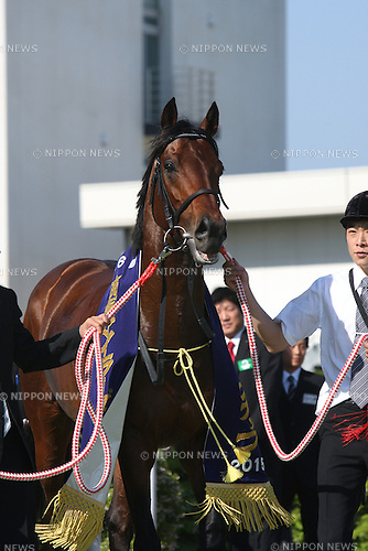 Red Arion, APRIL 26, 2015 - Horse Racing : Red Arion after winning the Yomiuri Milers Cup at Kyoto Racecourse in Kyoto, Japan. (Photo by Eiichi Yamane/AFLO)