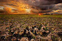 Pinnacle rock, jagged limestone, Everglades National Park, Florida