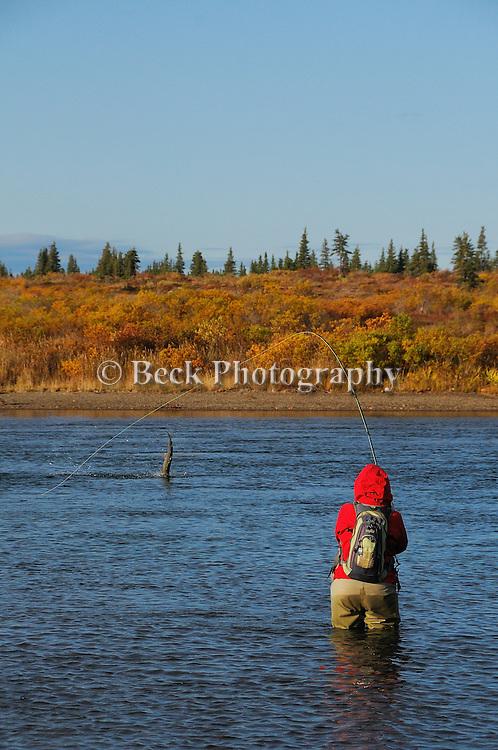 the big Ku Alaska, fall season