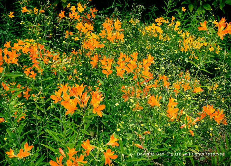 7.1.17 - Orange Delight...