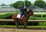 April 26, 2019 : Champagne Anyone works out at Churchill Downs, Louisville, Kentucky, preparing for a start in the Kentucky Oaks. Owner Six Column Stables LLC and Randall L. Bloch, trainer Ian R. Wilkes. By Street Sense x Lucevan (Ghostzapper) Mary M. Meek/ESW/CSM