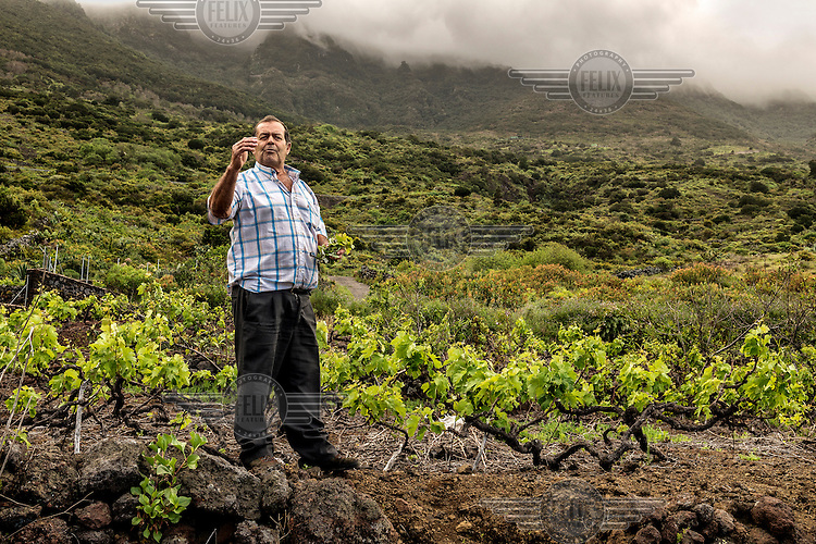 A vintner checks the quality of the grape crop in a vineyard established in the volcanic soil of Heirro Island. /Felix Features
