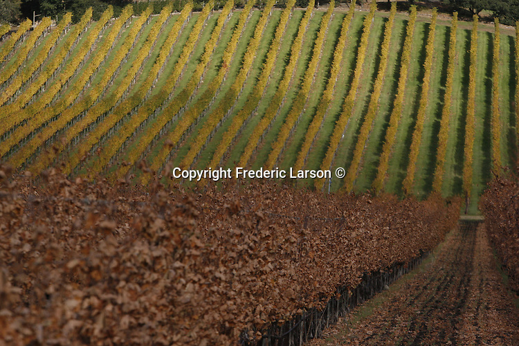Autumn vineyards and flowers in Napa Valley California.