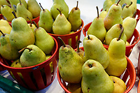 Baskets of Quebec grown pears for sale in the Jean Talon public market or Marche Jean Talon, Montreal, Quebec, Canada