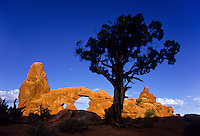 Turret Arch at sunrise with a junipher tree in the shadow. Arches National Park