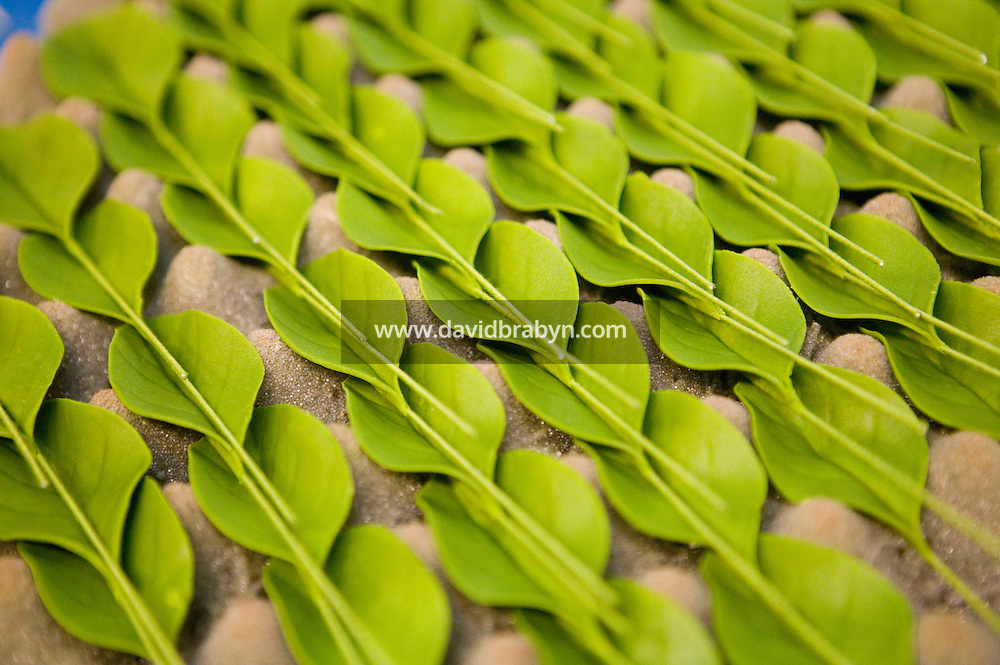 6 April 2006 - New York City, NY - Freshly made edible leaves that will be used to decorate cakes dry out at Sylvia Weinstock Cakes in New York City, USA, 6 April 2006. The owner, Sylvia Weinstock is known as the queen of wedding cakes in New York.