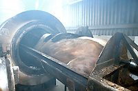 A cow slaughtered due to bovine spongiform encephalitis about to be placed in an incinerator to be destroyed..©shoutpictures.com..john@shoutpictures.com