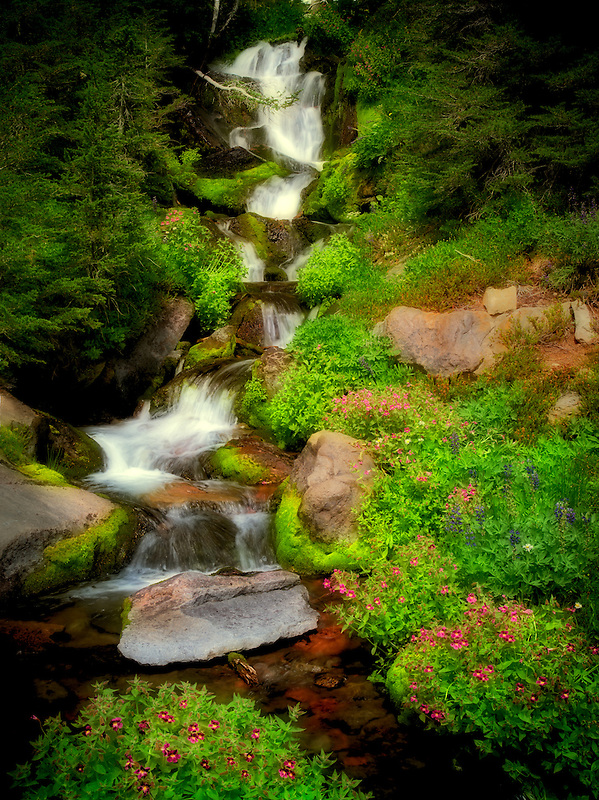 Small waterfall and Monkey Flowers. Bird Creek meadows. Mt. Adams Wildernesss, Washington