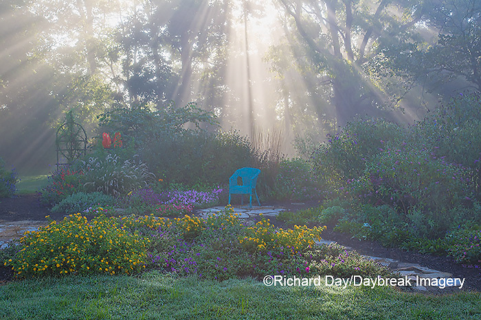 63821-23710 Sun rays in fog in flower garden, Marion Co., IL