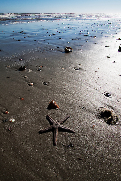 beach shells and sand in the surf starfish Folly Beach South Carolina blue sky