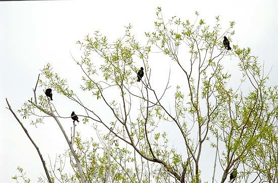 Birds in a tree<br />