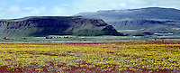 Panoramic view of Field of flowers, Iceland