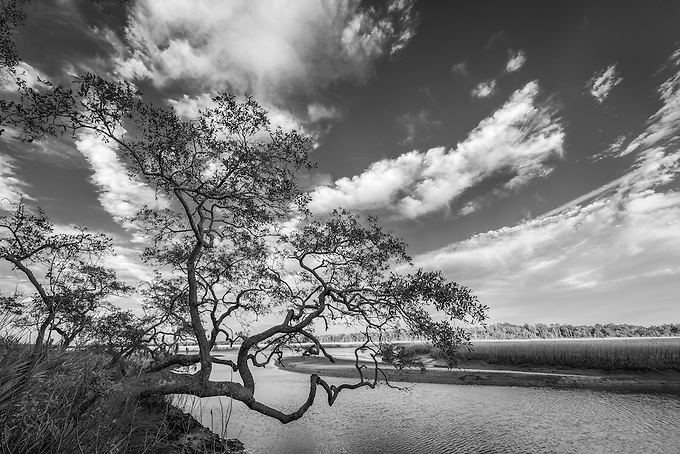 Gnarled old tree hangs over the wetlands of Pumpkin Hill Preserve in north Florida.