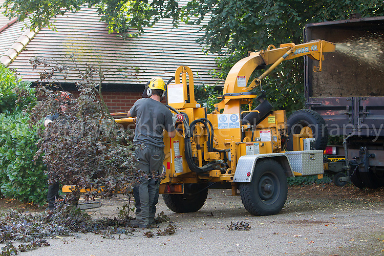 High Elms Tree Surgery - 23rd August 2013  - Harpenden<br /> <br /> Photo: Richard Washbrooke Photography