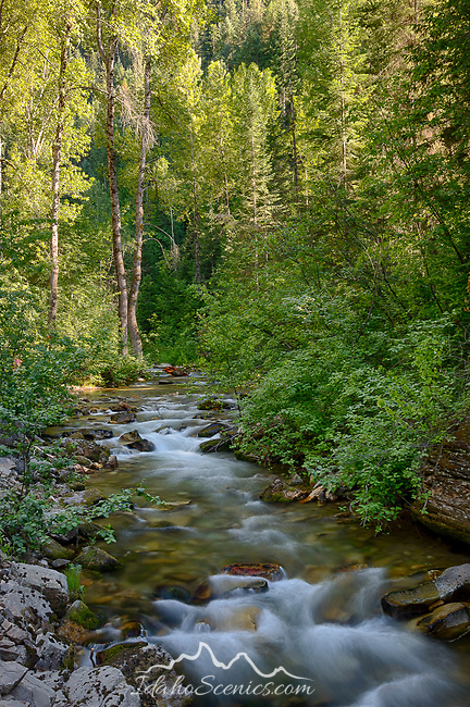 Idaho, North, Shoshone County, Osburn. Big Creek in the St. Joe District of the Idaho Panhandle National Forest in  summer.