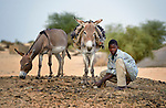 A boy and two donkeys in Timbuktu, a city in northern Mali which was seized by Islamist fighters in 2012 and then liberated by French and Malian soldiers in early 2013.  The boy belongs to the Bella ethnic group, which has traditionally been exploited by Timbuktu's lighter-skinned groups.