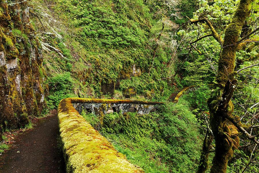 Shepperd's Dell Trail, Columbia River Gorge National Scenic Area, Oregon, USA