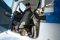 Volunteer Iditarod pilot Jerry Wortley with a load of dropped dogs at the Shageluk checkpoint on Saturday March 9, 2013...Iditarod Sled Dog Race 2013..Photo by Jeff Schultz copyright 2013 DO NOT REPRODUCE WITHOUT PERMISSION